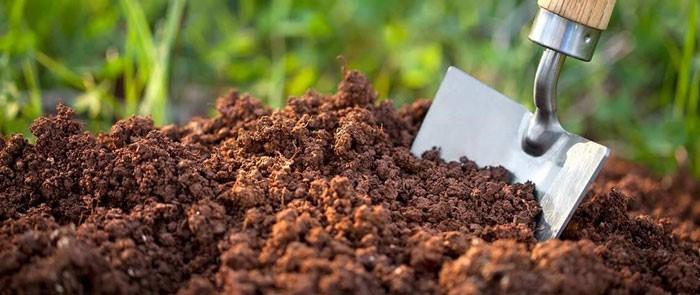 فجایع جانشینی ارز نیمایی به جای ارز دولتی برای خرید کود کشاورزی